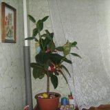 PHOTO-CRNGPRTK00010000-9591-48160923.jpg