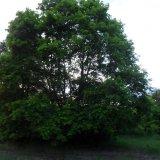 PHOTO-CRNGPRTK00010000-67177-ba299e4e.jpg