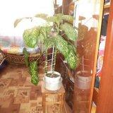 PHOTO-CRNGPRTK00010000-245948-8dec5214.jpg