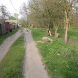 PHOTO-CRNGPRTK00010000-248247-4627e11d.jpg
