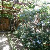 PHOTO-CRNGPRTK00010000-376344-0b3756bb.jpg