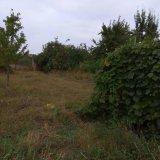 PHOTO-CRNGPRTK00010000-389466-8f513f02.jpg