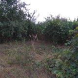 PHOTO-CRNGPRTK00010000-389466-9866af75.jpg