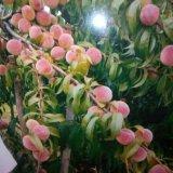 PHOTO-CRNGPRTK00010000-508234-824b2c35.jpg