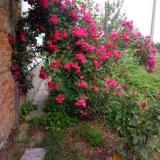 PHOTO-CRNGPRTK00010000-508234-d53970a8.jpg