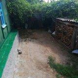 PHOTO-CRNGPRTK00010000-539141-5b57d70d.jpg